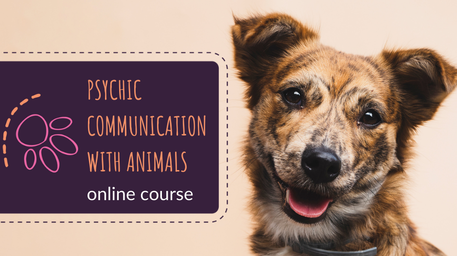 Psychic Communication With Animals